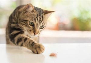 猫好きな人におすすめ